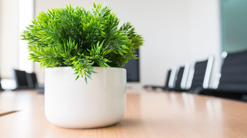 How To Clean Office Plants Octoclean